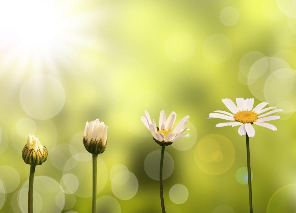 fleurs évolution étapes progression